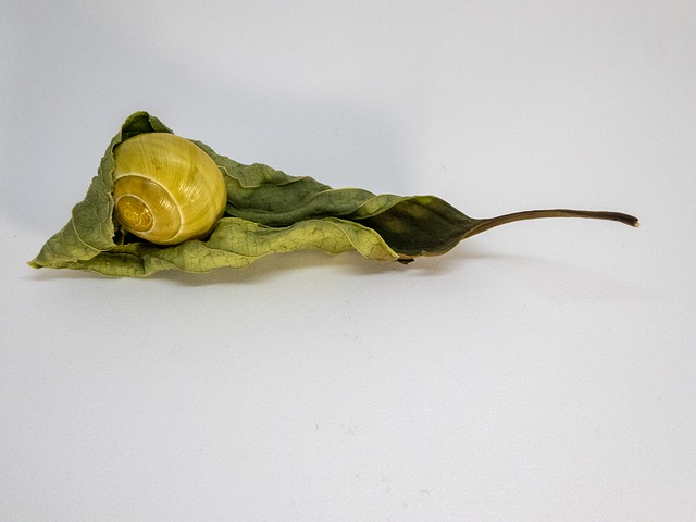 Snail, Nature, Yellow, Leaf, Rolled, Reptile, Animal