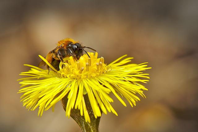 Bee, Spring, Flower, Close Up, Yellow