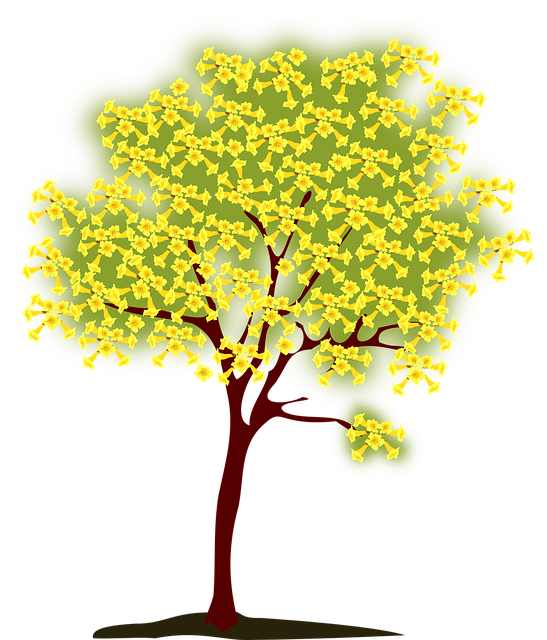 Tree, Blossoming, Yellow, Nature, Spring