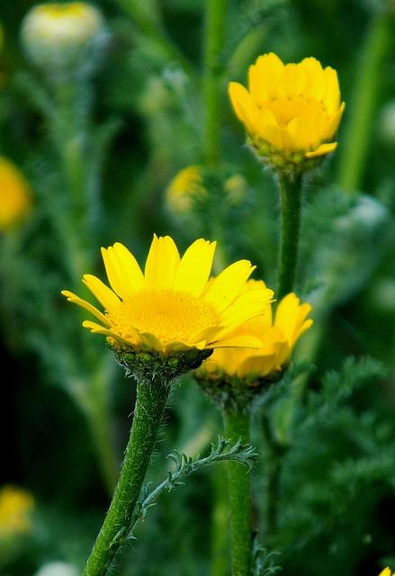 Nature, Flower, Plant, Summer, Field, Yellow