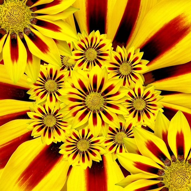 Summer Flower, Sun, Yellow, Collage, Flowers, Nature
