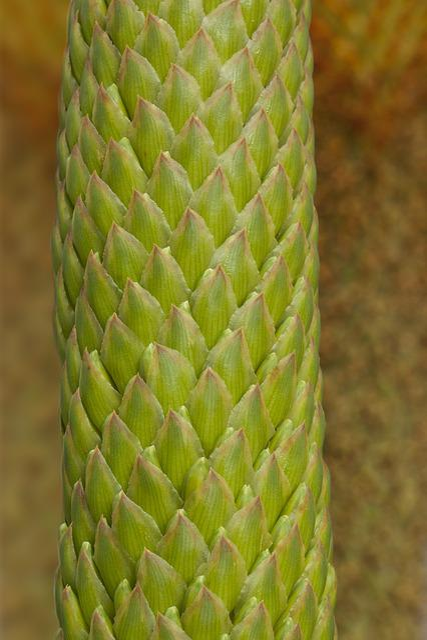 Plant, Tender, Fine, Leaflets, Green, Greenish, Yellow