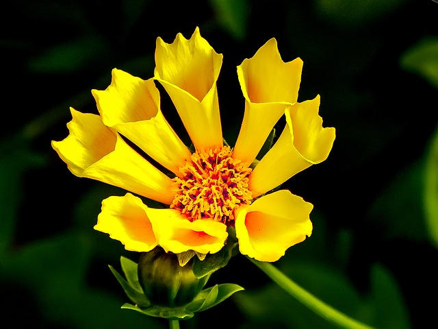 Yellow, Flower, Yellow Flower, Cone Flower, Sunshine
