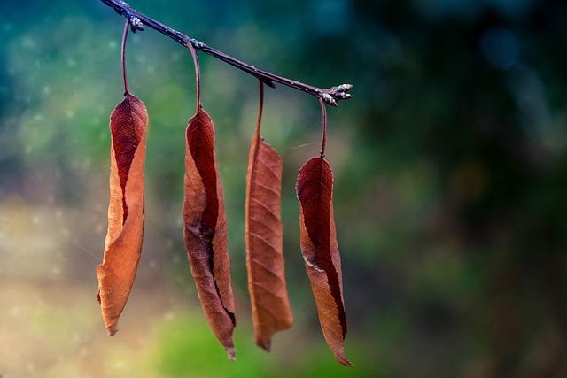 Autumn, Yellow, Yellowed, Red, Rural