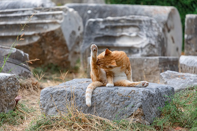 Cat, Wash, Yoga, Temple, Ruin, Greece