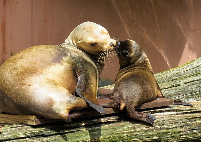 Animal, Sea Lion, Young Animal, A Young Sea Lion, Love