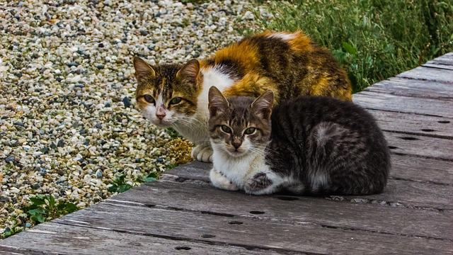 Cats, Stray, Outdoors, Cute, Animal, Young, Adorable