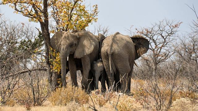 Elephant, Baby Elephant, Young Animal, Africa, Namibia