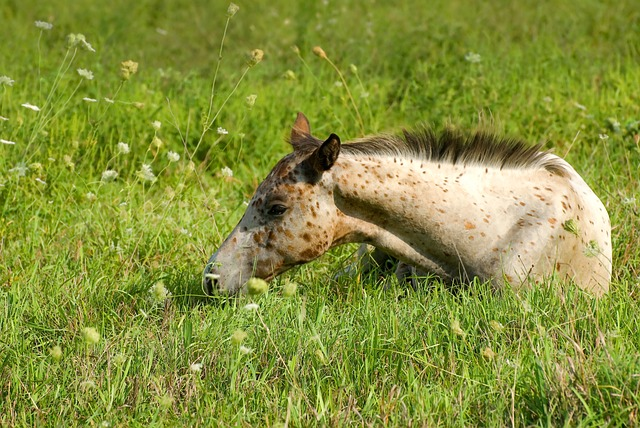 Grass, Animal, Mammal, Nature, Summer, Young, Horse