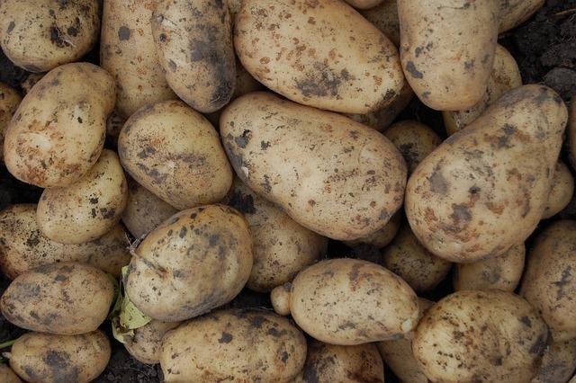 Potatoes, Vegetable, Tubers, Tuber, Beige, Young