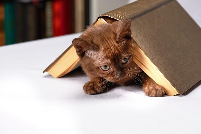 Cute, Young, Cat, Home, Animals, Kitten, Burma, Book