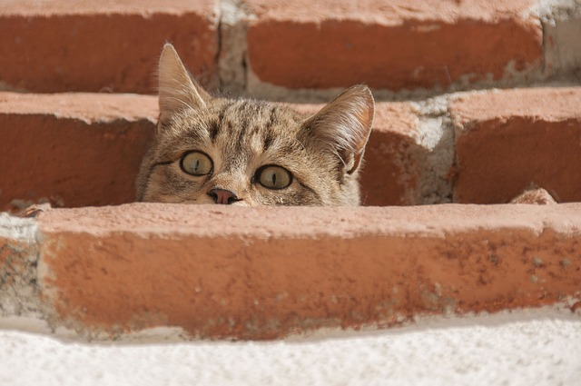Cat, Curious, Young Cat, Cat's Eyes, Attention, Wildcat