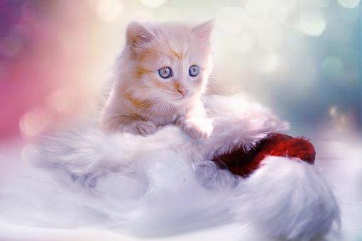 Kitten, Grey, Heart, Cat, Christmas, Pet, Young Cat