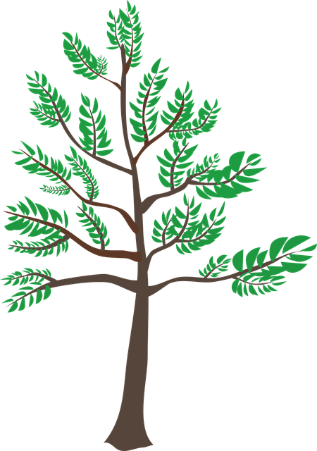 Cedar, Green, Heatwave, Leaf, Summer, Tree, Young