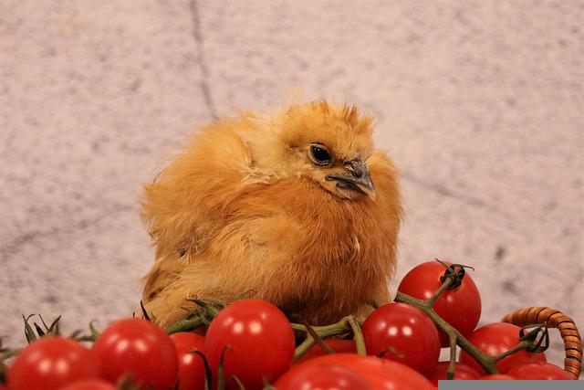 Chicken, Chicks, Easter, Animal, Cute, Young, Baby