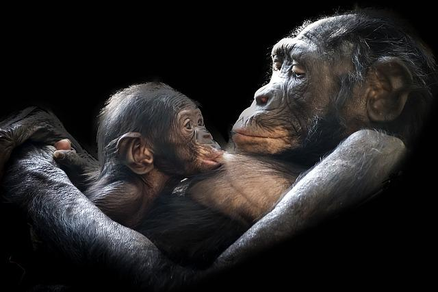Gorillas, Mammals, Young, Child, Mother, Dam, Infant