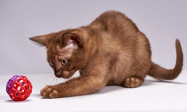 Kitten, Cat, Cute, Animals, Little, Mammals, Young, Pet