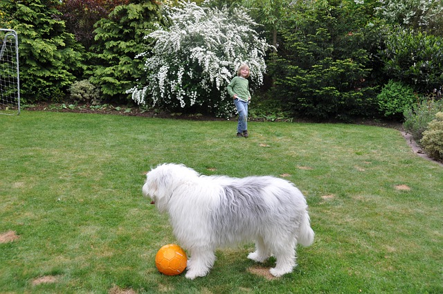 Dog, Ball, Young Dog, Bobtail, Child, Young, Boy