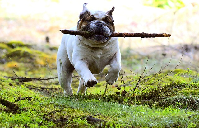 Dog, Pet, Batons, Fun, Mammal, Young Dog, Animal, Face