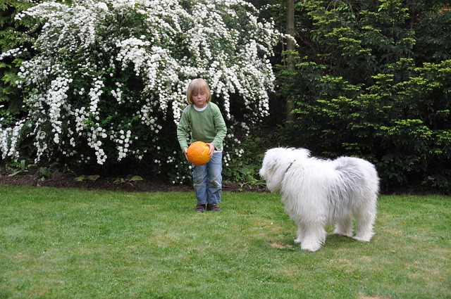 Ball, Dog, Boy, Play, Shoot, Bobtail, Child, Young