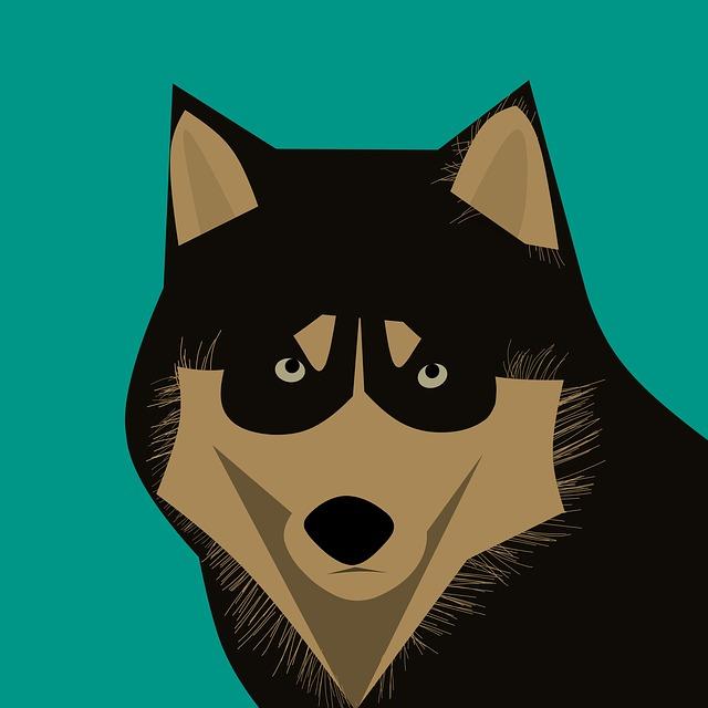 Dog, Husky, Animal, Snow Dog, Face, Young Dog, Eye