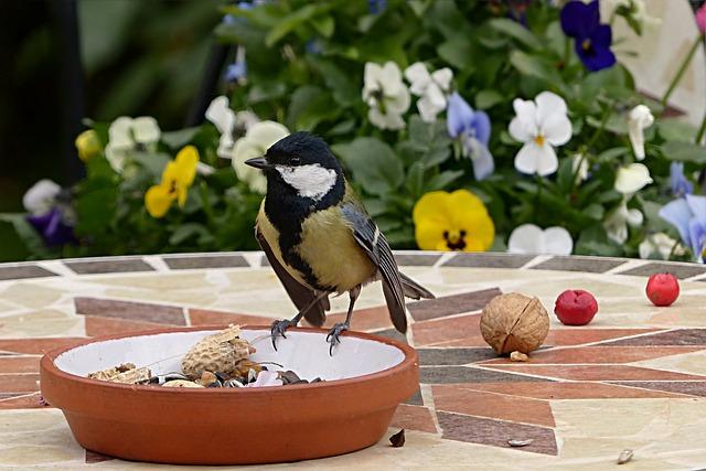 Animal, Bird, Tit, Parus Major, Young, Garden, Foraging
