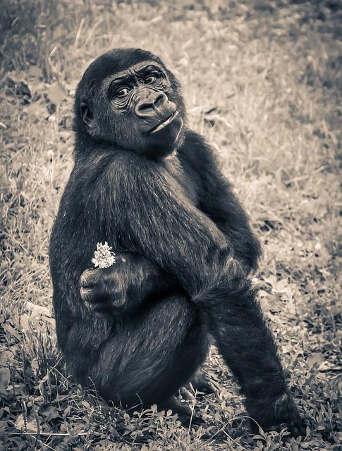 Gorilla, Monkey, Puppy, Ape, Endangered Species, Young