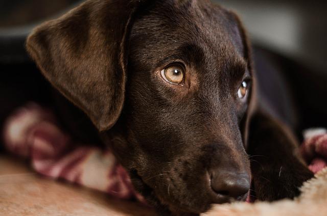 Dog, Cute, Mammal, Portrait, Pet, Puppy, Animal, Young