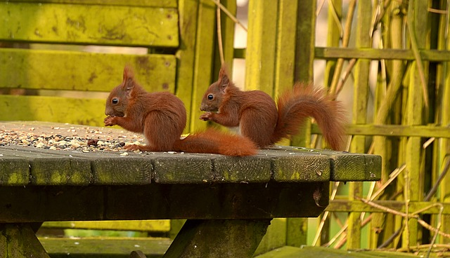 Squirrel, Animal, Young Animal, Young, Nature, Nut, Eat