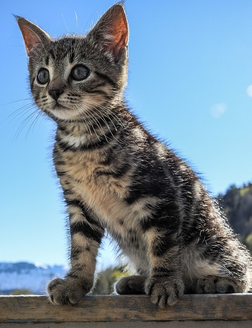 Kitten, Sun, Cat, Cute, Pet, Animal, Summer, Young