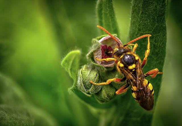 Insect, Wasp, Macro, Spring, Ypaithro, Nature, Fly