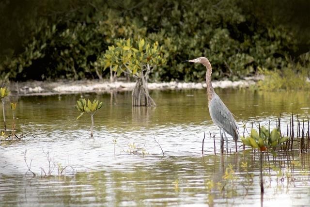 Nature, Ave, Yucatan, Peaceful, Feathers, Bird, Animals