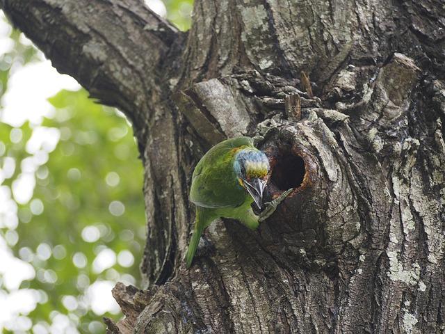 Quasi Woodpecker, Colored Birds, Monk, Zaventem-nest