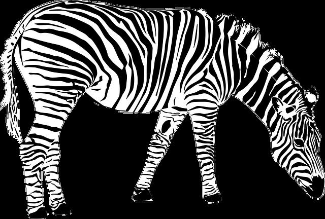 Zebra, Africa, Animal, Black And White