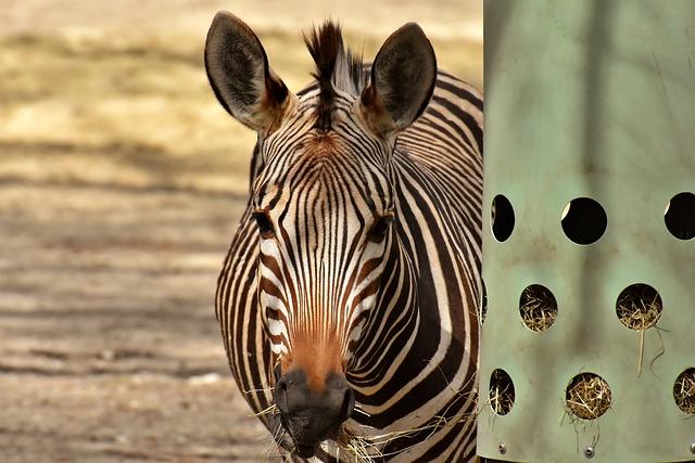 Zebra, Wild Animal, Zoo, Africa, Animal, Zebra Crossing