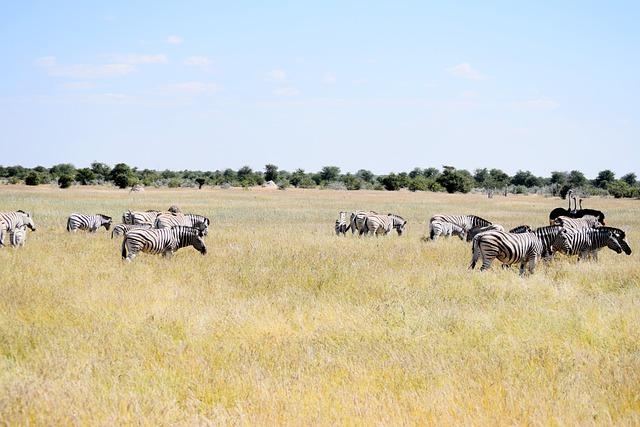 Zebra, Ostrich, Etosha, Namibia, Nature, Wildlife, Wild