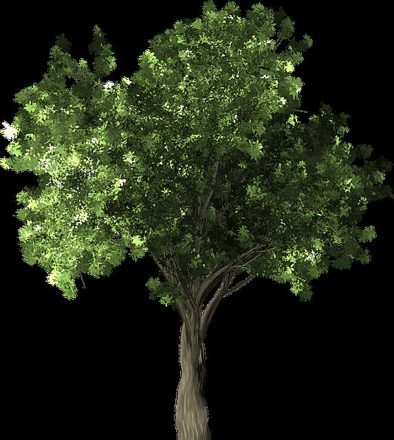 Zelkova Serrata, Tree, Green, Zelkova, Serrata, Japan