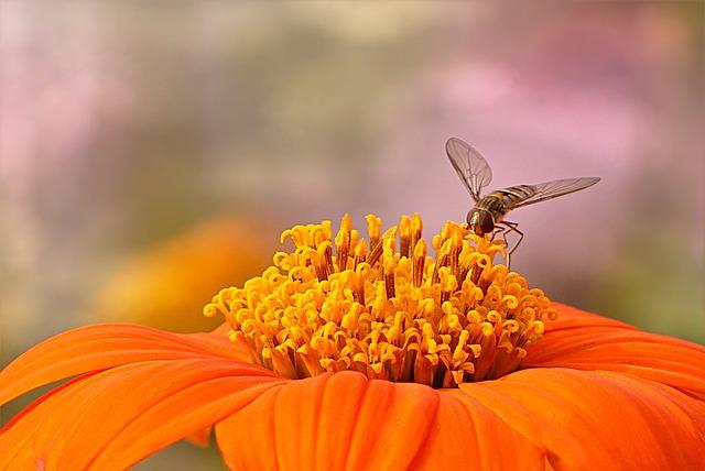 Flower, Close Up, Zinnia, Zinnia Elegans, Orange, Bee