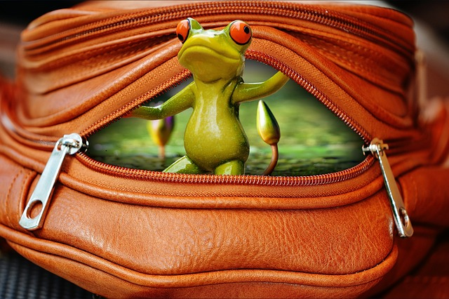 Frog, Bag, Zip, Open, Funny, Cute, Sweet
