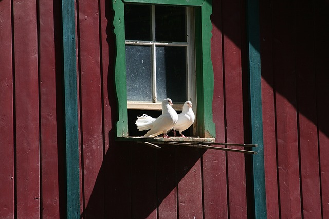 Pigeons, Pigeon House, Zoo, Zittau, Home, Roof