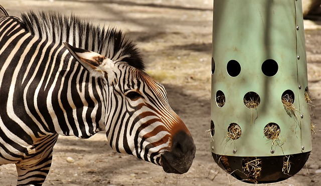 Zebra, Wild Animal, Zoo, Africa, Animal, Zebra Crossing