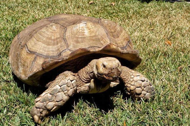 El Salvador, Zoo, Wild Life, Turtles, African Turtle