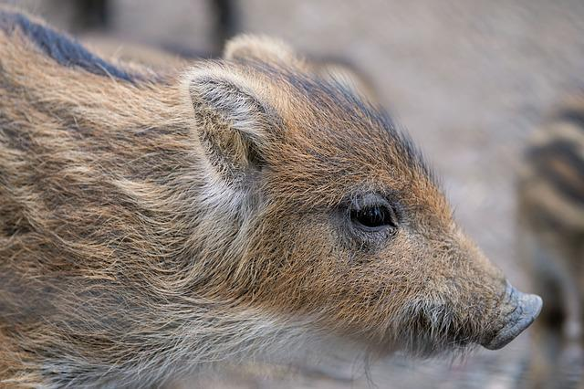 Piglet, Boar, Pig, Animal World, Zoo, Wild
