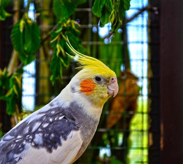 Zoo, Animal, Bird, Colored, Parrot, Cockatiel