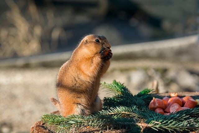 Gophers, Eat, Enjoy, Zoo, Tiergarten Nature