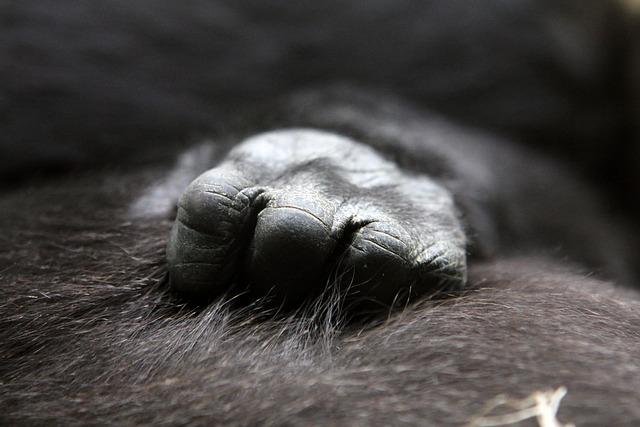 Gorilla, Baby, Hand, Close Up, Ape, Animals, Zoo