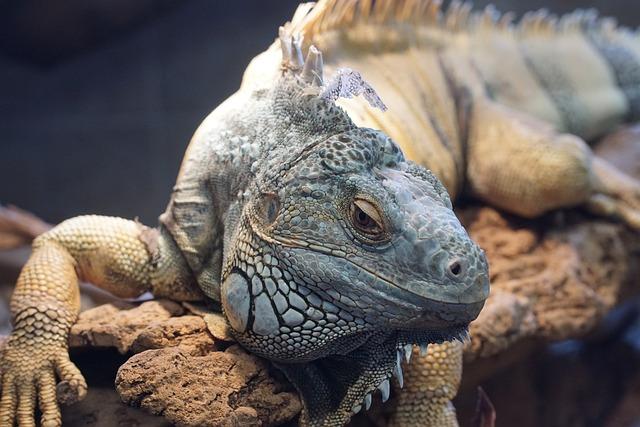 Lizard, Zoo, Iguana, Zurich