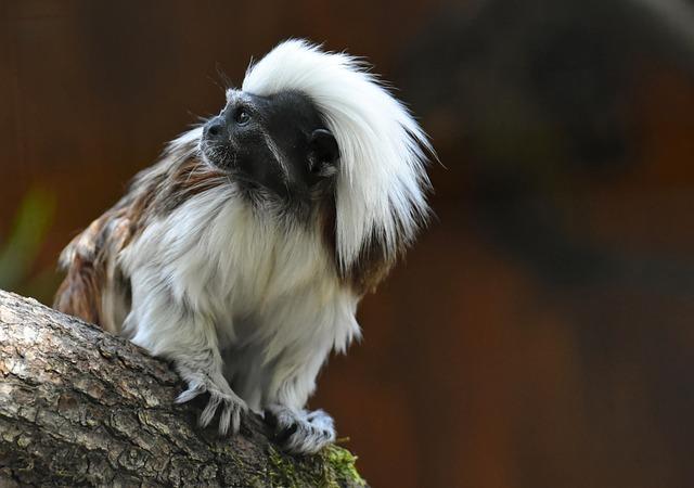 Monkey, Animal, Animal Photography, Cute, Zoo