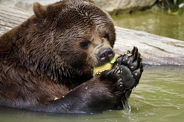 Bear, Brown Bear, Animals, Nature, Zoo, Animal World