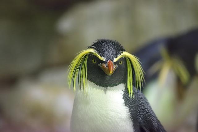 Penguin, Rockhopper Penguin, Zoo, Animal, Bill